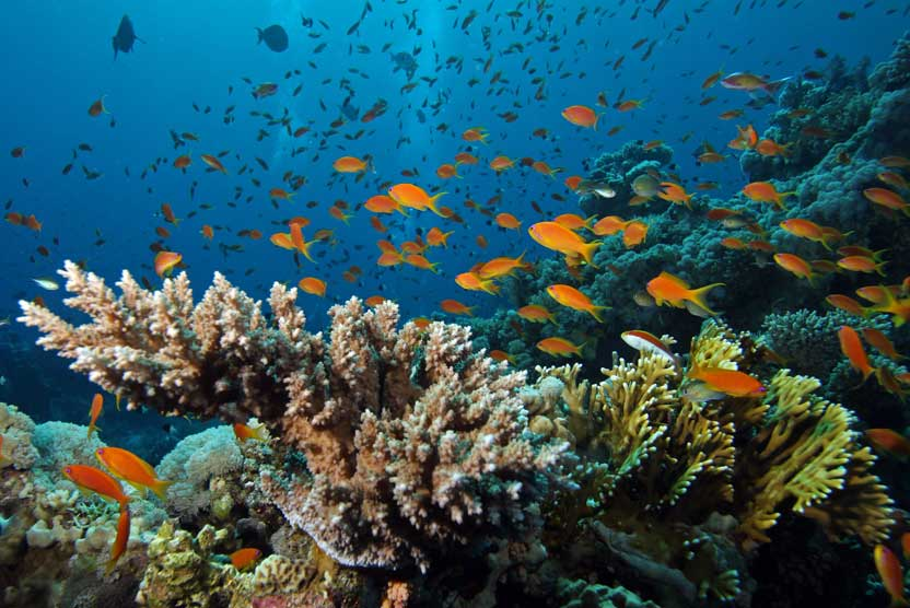 Raja Ampat diving photo of a fish on a reef