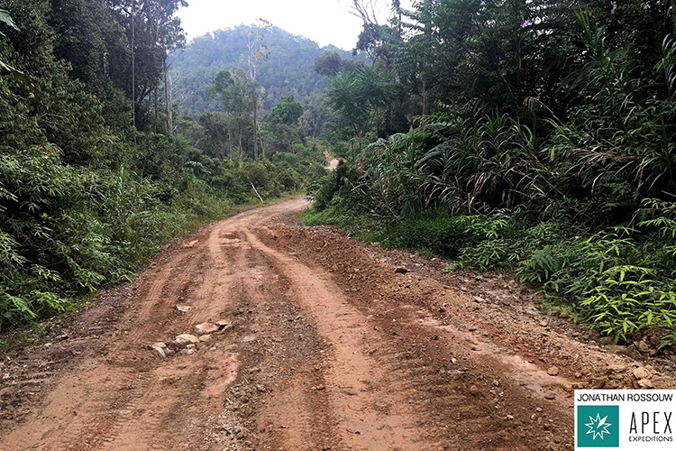 Wamlana Logging Road driven on 9000 bird quest