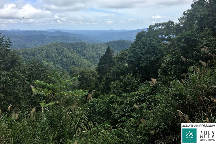 Image of forest along Wamlana Logging Road on 9000 bird quest