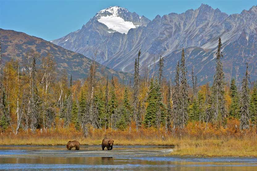 Alaska land tours image of Brown Bear in Lake Clark National Park
