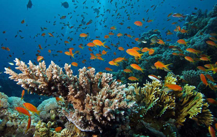 raja ampat coral reef conservation image