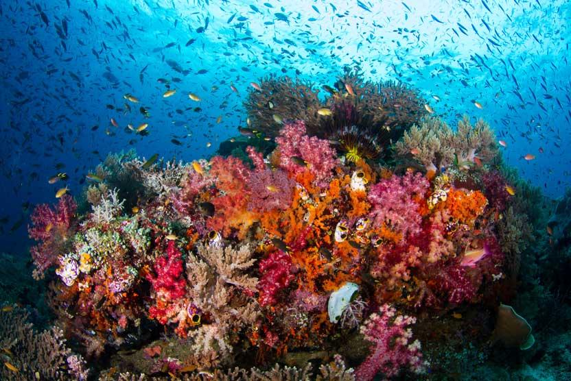 Banda Sea diving photo of colorful reef scene