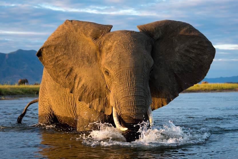 Zimbabwe safari tour image of African Elephant