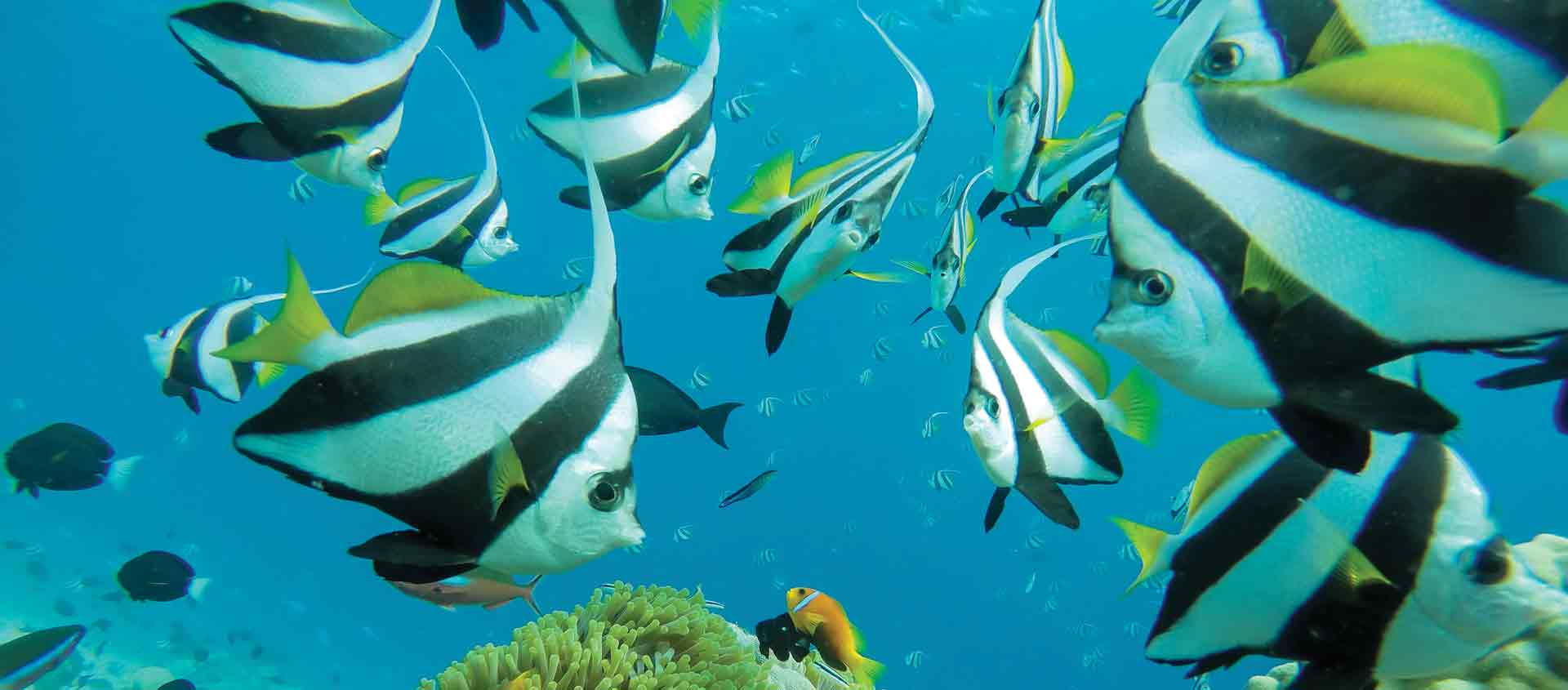 Seychelles cruise underwater photo of butterflyfish on reef