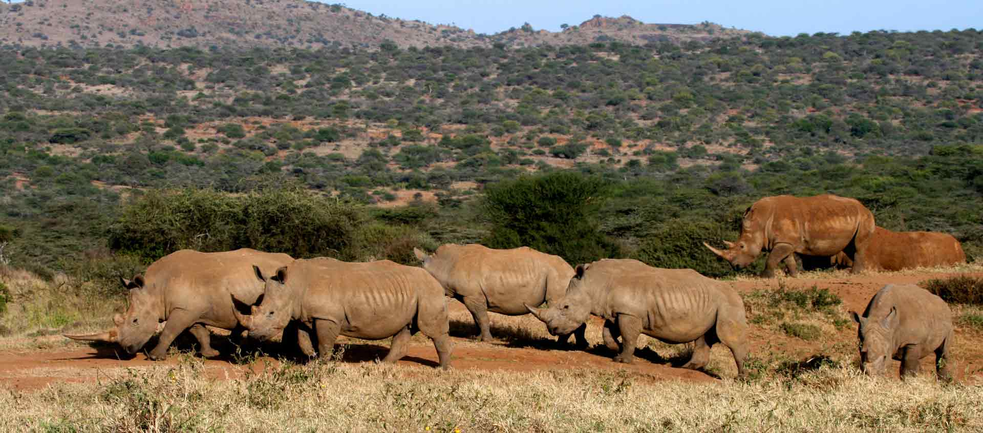 Kenya Private Wildlife Reserves image of White Rhinos