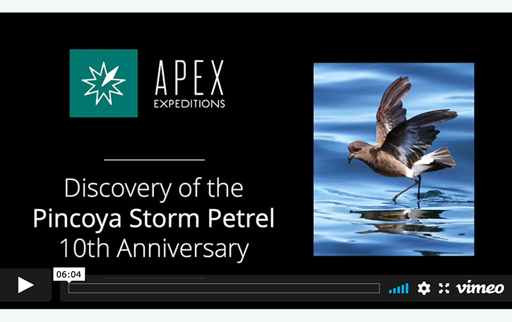 Video-title-slide-Pincoya-Storm-Petrel