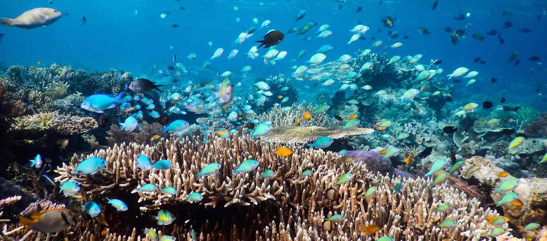 cruise australia west coast image of life on a reef